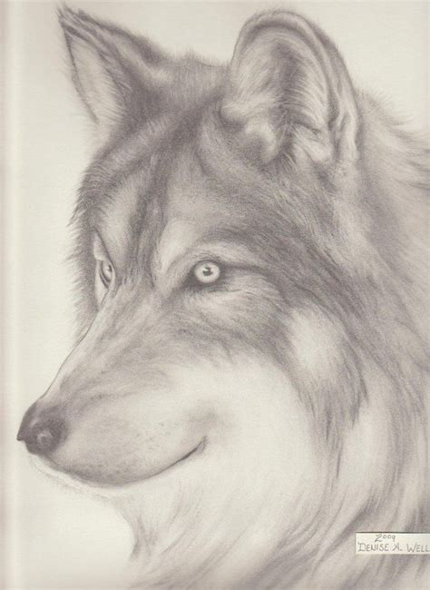 pencil drawings  anime wolf drawing denise  wells