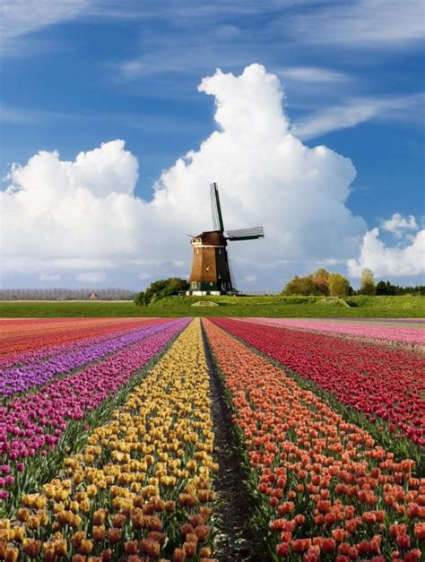 14 Reasons to visit the Netherlands in Spring ...