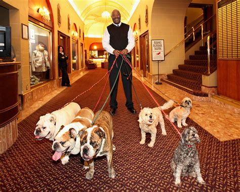 How Muttmixers Help Raise Funds For Dogs » Mattie Dog