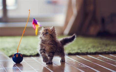 Glueckliche Haustiere Sauberkeit Und Erziehung by Katzen Erziehen Worauf Kommt Es An Bei Der Katzenerziehung