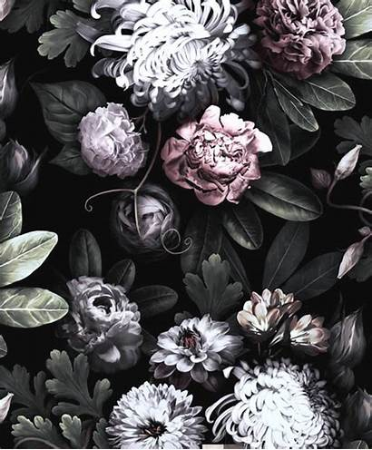Floral Dark Flower Flowers Wallpapers Peony Roses