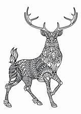 Coloring Deer Pages Hunting Elk Printable Getcolorings Colorings sketch template