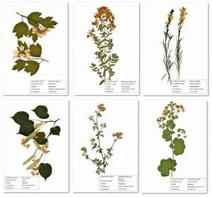 Was Ist Ein Herbarium : herbarium 20 pflanzen frei w hlbar pflanzen aus gro e auswahl ebay ~ A.2002-acura-tl-radio.info Haus und Dekorationen