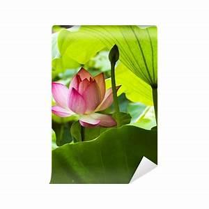 Blume Und Leben : fototapete lotus blume und lotus bl tenpflanzen pixers ~ Articles-book.com Haus und Dekorationen
