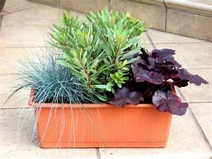 Gräser Für Balkonkasten : bepflanzter blumenkasten 60 cm mit sedum pflanzen ~ Michelbontemps.com Haus und Dekorationen