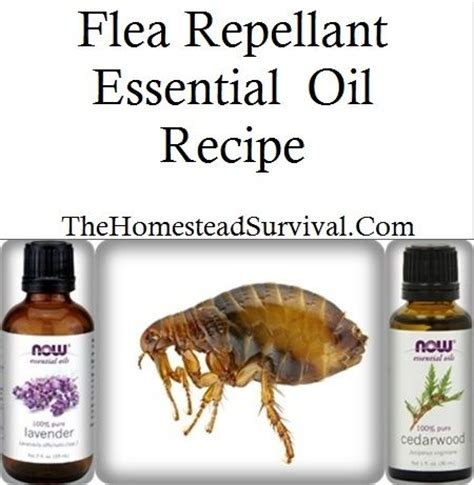 how to get rid of termites in kitchen cabinets 25 best ideas about flea repellant on 9908