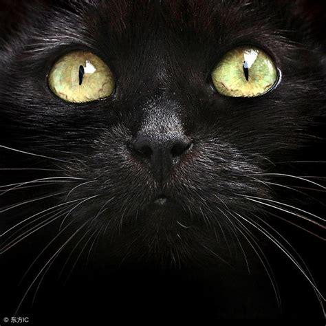 Последние твиты от 黑貓老師 (@kurtsunx). 很多人說黑貓不詳,你知道原因嗎,你們家養貓了嗎 - 每日頭條