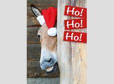 Postkarte Weihnachtskarte witziger Esel, Pferd 'Ho Ho Ho