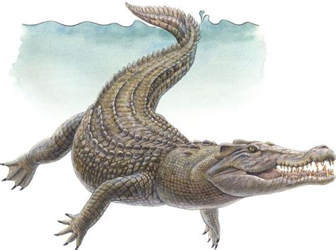 Animal Nile Crocodile