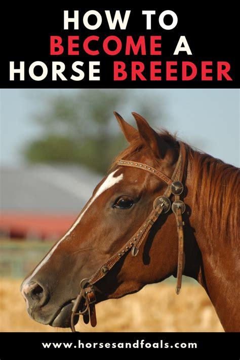 horse breeder become
