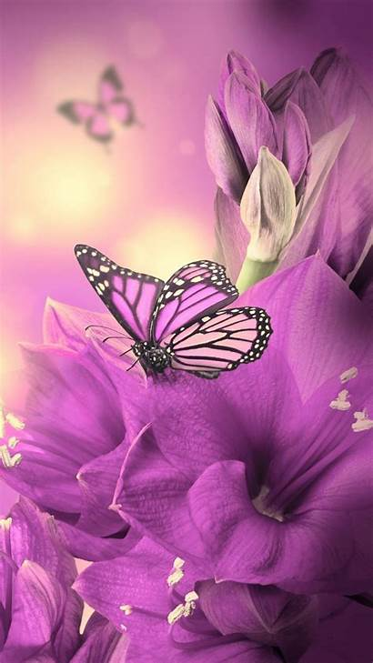 Purple Butterfly Iphone Wallpapers Resolution