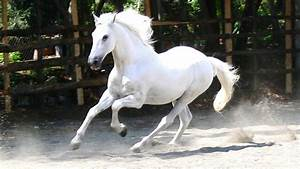 Horses images White Horse ♡ HD wallpaper and background ...