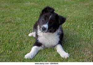 Black And White Sheep Dog Pictures to Pin on Pinterest ...