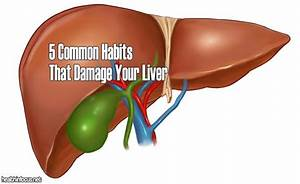 The Liver Is One Of The Most Important Organs In Your
