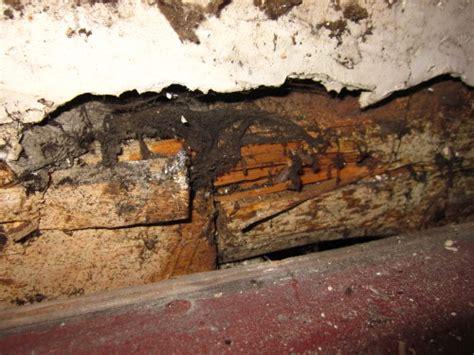 Baude  Forum  Holzschutz, Holzschäden, Holzsanierung