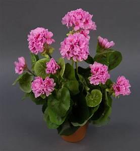 Kunstblumen Orchideen Topf : geranie 36cm rosa ohne topf lm kunstpflanzen k nstliche blumen pflanzen kunstblumen geranie ~ Whattoseeinmadrid.com Haus und Dekorationen