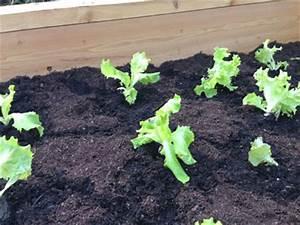 Hochbeet Bepflanzen Im 1 Jahr : der hochbeet ratgeber so pflanzen sie ihr eigenes gem se an ~ Frokenaadalensverden.com Haus und Dekorationen