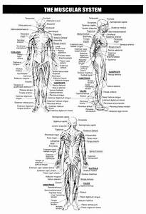 131 Best Human Body Images On Pinterest