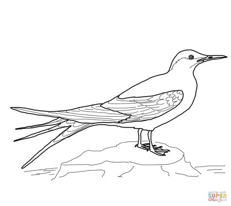 Arctic Tern Coloring Page Free Printable Coloring Pages