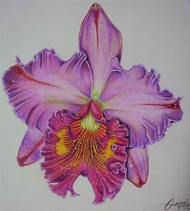 Orchid... Colored pencils on durex Geller 20*20 cms (2010 ...