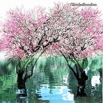 Springtime Picsart Edit Cherryblossom