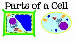 All About Cells And Cell Structure  Parts Of The Cell For
