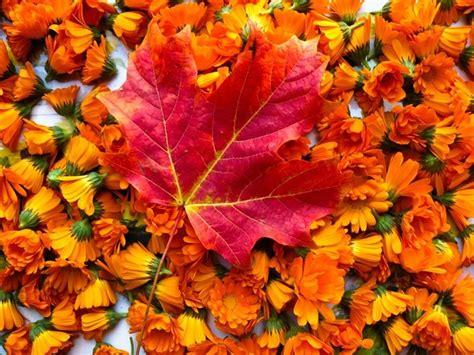 arbusti dai fiori rosei fiori dai colori autunnali fiori delle piante 10 fiori