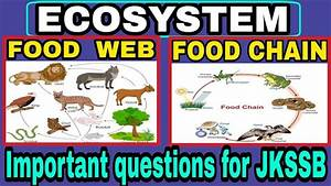 Ecosystem Food Chain And Food Web