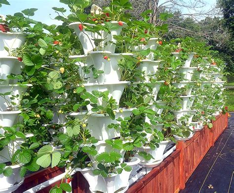 Vertical Hydroponic Garden by Grow 600 Plants In 36sqft Hydroponic Vertical Garden