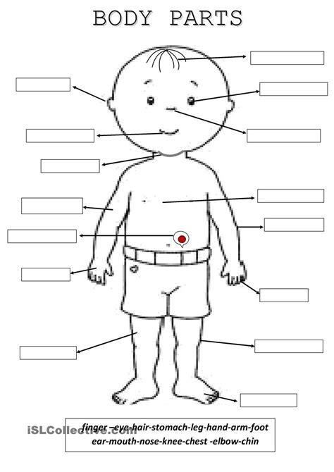 body parts  activity ideas pinterest bodies