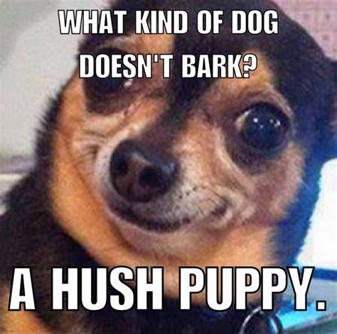 Dog Pun Meme - 202 best dog memes images on pinterest