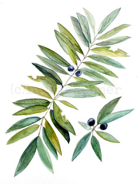 botanical nature art leaves  berries watercolor
