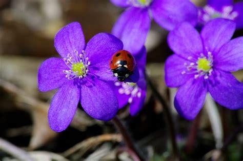 foto Kūdra - fotografija - šimtaprocentinis pavasaris :)