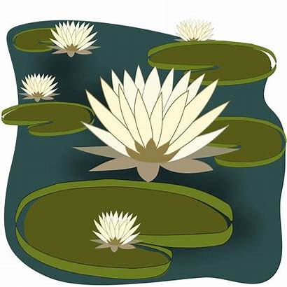 Pond Water Clipart Lily Fish Clip Clipartlook