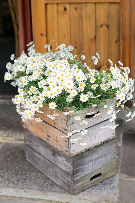 ideas  incorporate chamomile daisies