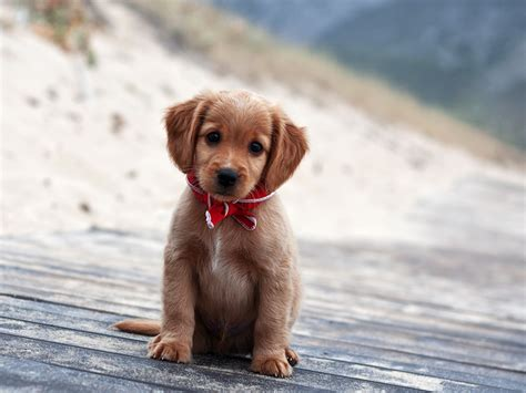 Cute And Adorable Puppy Pictures Cuteness Overflow