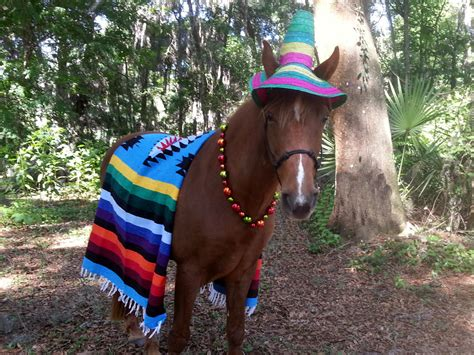 mexican horses costume mayo cinco equine dead horse costumes halloween pony