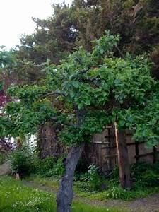 Apfelbaum Wann Schneiden : einen apfelbaum schneiden der gartenratgeber ~ Frokenaadalensverden.com Haus und Dekorationen