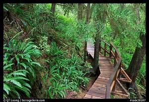 Picture  Photo  Boardwalk In Rain Forest  Pacific Rim