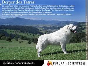 berger des tatras carte virtuelle With forum plan de maison 10 definition venus etoile du berger futura sciences