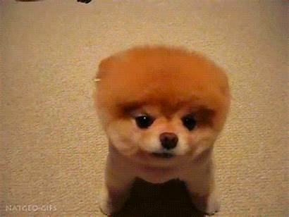 Boo Dog Gifs Puppy Cutest Animals Dogs