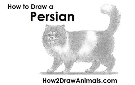 draw  persian cat