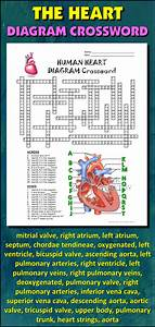 Heart Crossword With Diagram  Editable