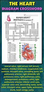 Heart Crossword With Diagram  Editable