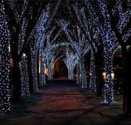christmas lights outside trees