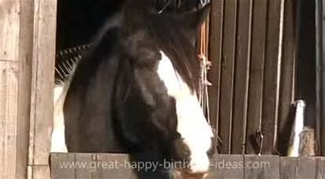 Not all relationships with dads are good so this list covers top songs for both good and bad experiences. Happy Birthday Horse Style! Free Pets eCards, Greeting Cards | 123 Greetings