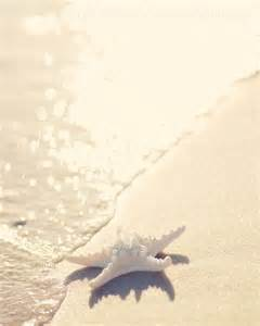 Starfish Beach Photography