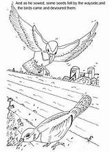 Sunday Parable Coloring Vineyard Crafts Sower Craft sketch template
