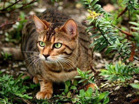 warrior cats der sternenclan und du dabei