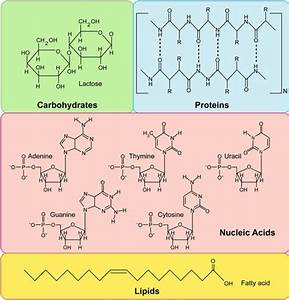 The Four Major Types Of Macromolecules
